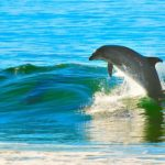 dolphin-1679468__340